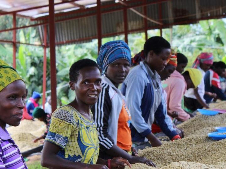 コーヒー生産における透明性