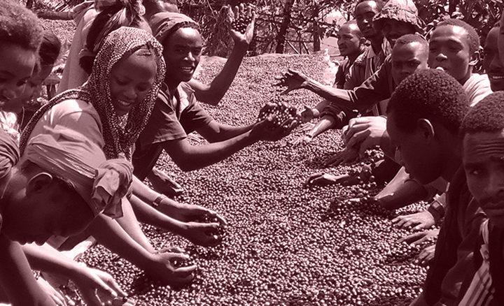#130 Record Coffee Company: Ethiopia Ambela