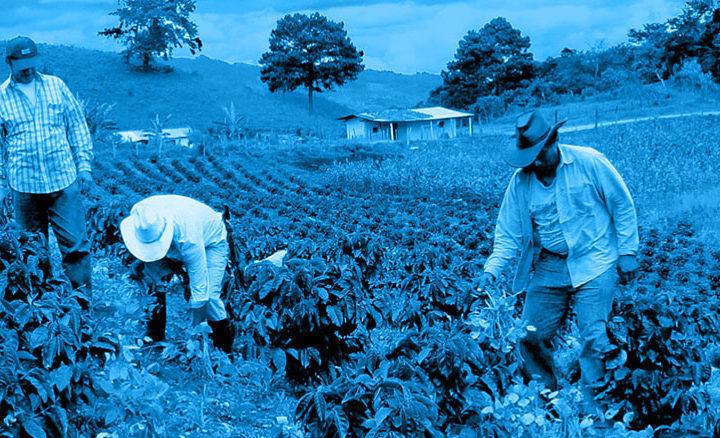 #131 Kaffe Obscura: Honduras Finca Cerro Azul