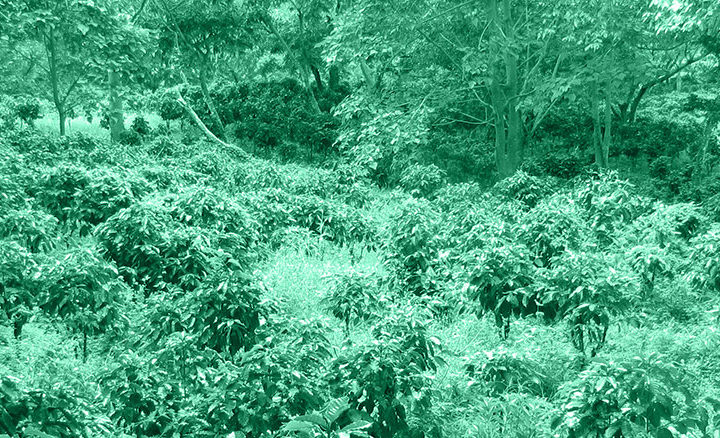 #133 Mokkamestarit: Savannah Organic Filter