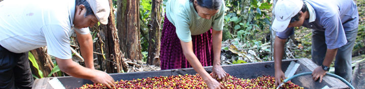 #134 Inka Paahtimo: Peru Tunki