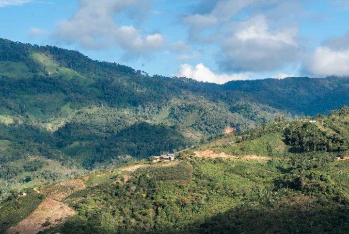 #137 Kahwe: Peru Cajamarca Añas Blue