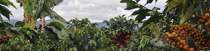 #140 Pirkanmaan Paahtimo: Honduras Santa Rosa Organic