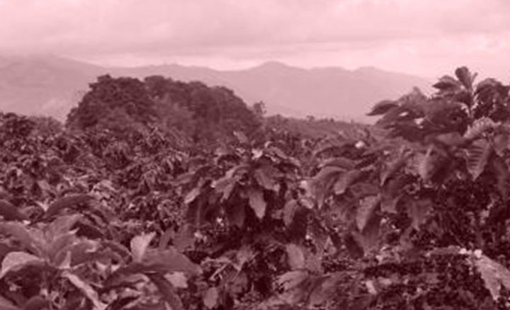 #157 Pirkanmaan Paahtimo: Colombia Golden Huila Deca