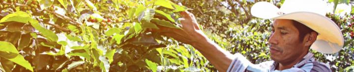 #150 Paahtimo Papu: Honduras, Organic Espresso