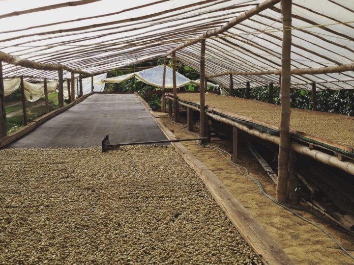 #156 Frukt Coffee Roasters: Espresso Agua De Dios