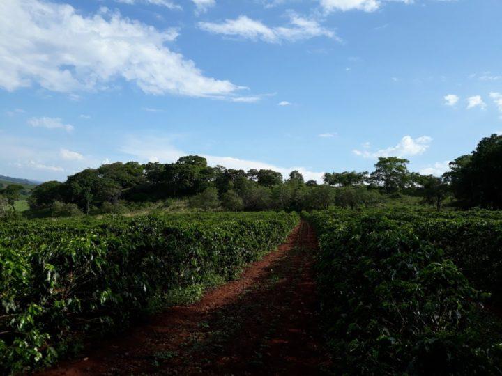 #162 Makea Coffee: Fazenda Batalha