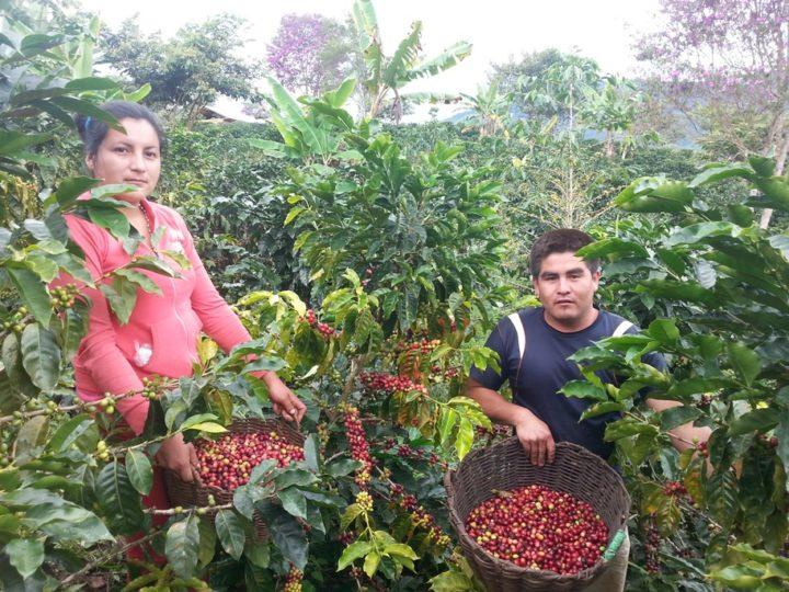 #163 ROST & Co.: Peru Espresso